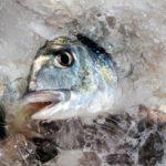Fisch Rezepte