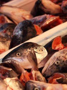 meist buntgefaerbter meeresfisch