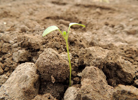 Patentierung_Pflanzen