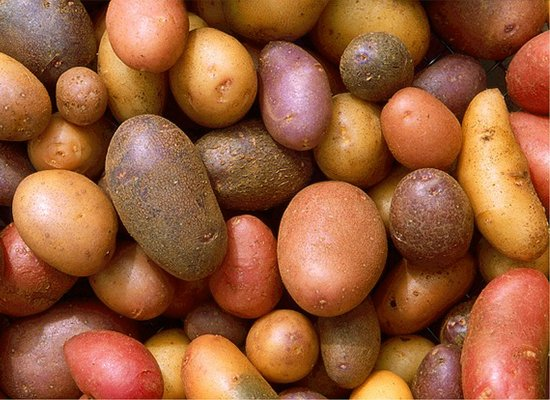 Kartoffel_Rezepte