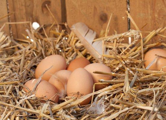 Eierkauf
