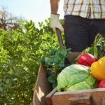Regionale Zutaten für mehr Nachhaltigkeit