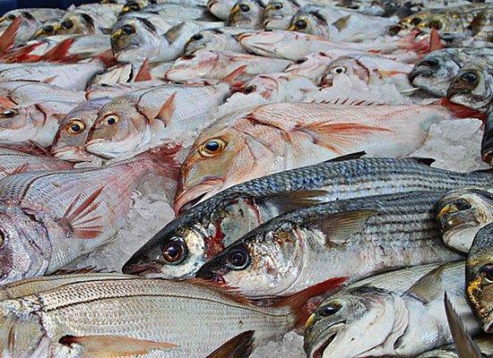 Fisch Diät