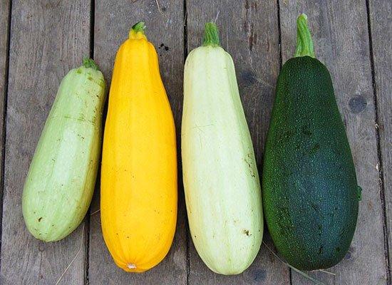 Sommergerichte Zucchini : Die schönsten zucchini rezepte saisonale rezepte im sommer