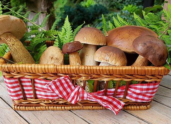 Rezepte mit Pilzen