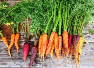 Karotten Rezepte