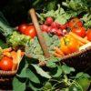 Saisonale Rezepte im Sommer