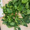Selleriegrün verwenden und nicht wegwerfen